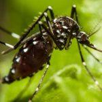 Kontrola komaraca mogla bi usporiti širenje bolesti u svijetu