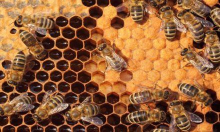 Korištenje pčela za mjerenje zagađenja u gradu