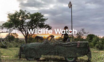 Postani virtuelni rendžer i učestvuj u očuvanju ugroženih životinjskih vrsta u afričkoj savani
